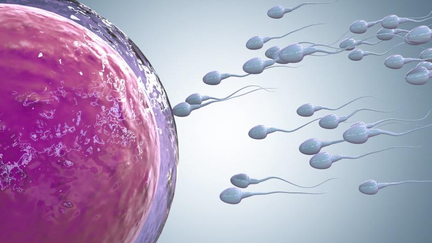 3d rendering sperm fertilize with ovum 4k footage Royalty-Free Stock Footage #1057545703