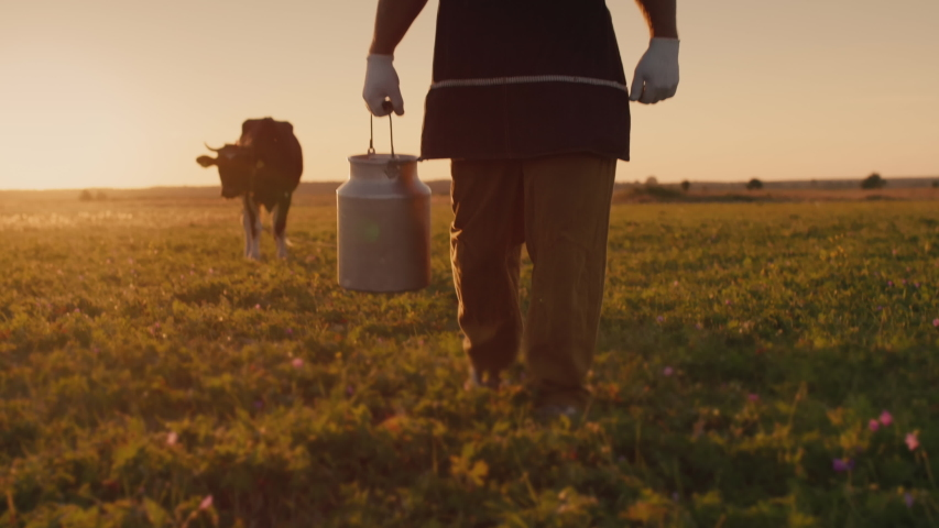 A farmer with a can of milk walks through a meadow, cows graze in the background