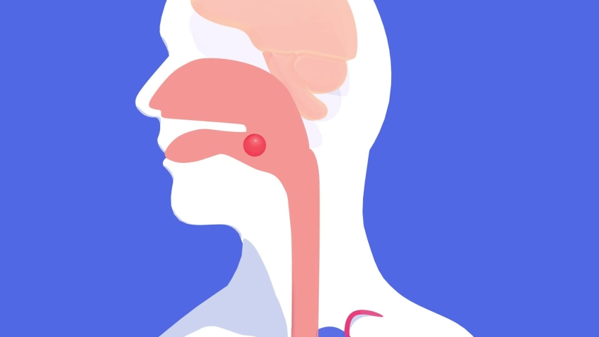 3d animation of the journey of a food through the human digestive system, from the mouth to the intestines. With flat colors and volume, silhouette on a blue background.