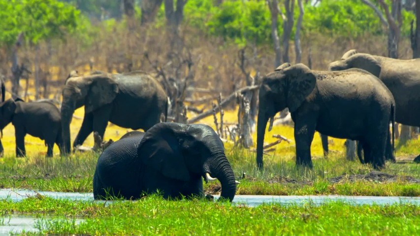 Kruger National Park \ South Africa         footage of elephants in Kruger national park Africa  , taken by handheld camera   Shutterstock HD Video #1057582882