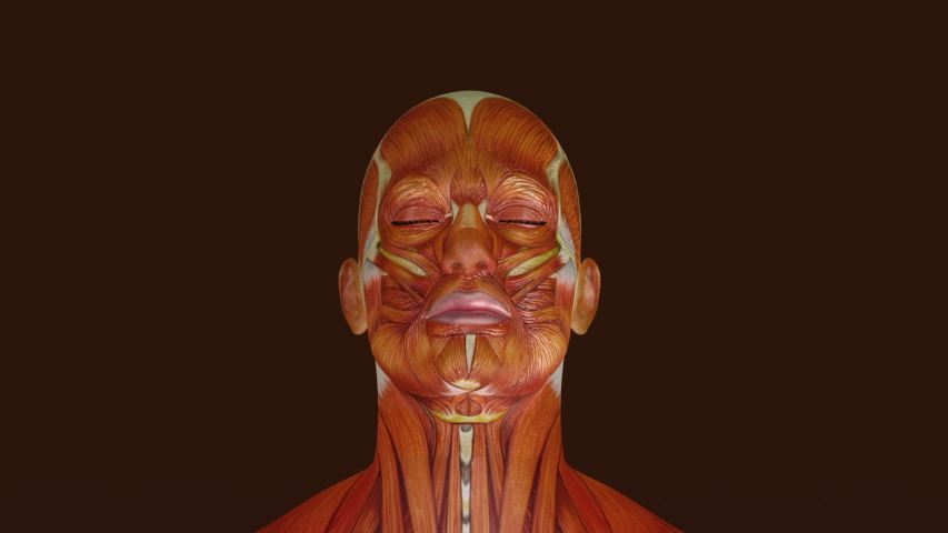 3D Animation of human facial anatomy illustration. | Shutterstock HD Video #1057627225