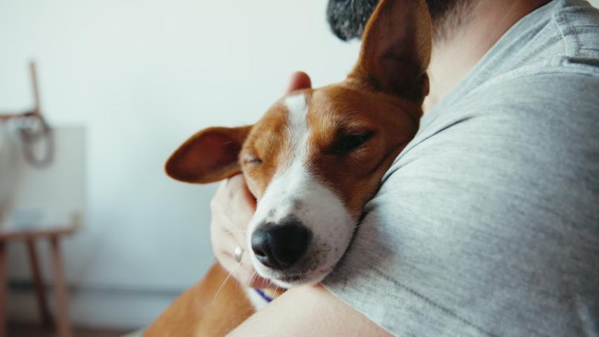 Closeup shot of young bearded man hugging his cute friend brown basenji pure breed dog. Puppy and human friendship | Shutterstock HD Video #1057628596
