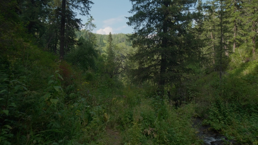 Walk along the path in the green forest around the mountains next to the river | Shutterstock HD Video #1057660657