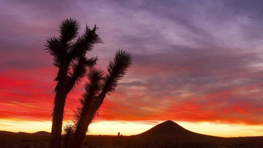 Colorful Red, Purple, Orange, Yellow Desert Sunrise with Silhouette Joshua Tree