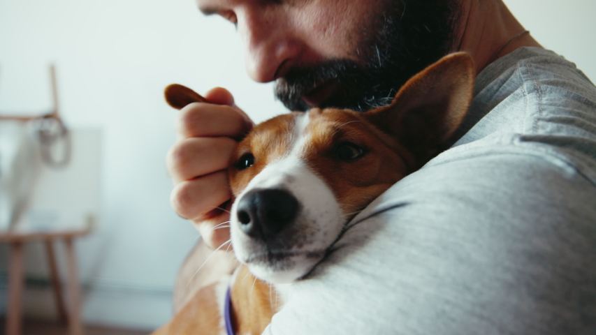 Close up shot of young bearded man hugging and kissing his cute friend brown basenji pure breed dog. Animals and human friendship | Shutterstock HD Video #1057720540