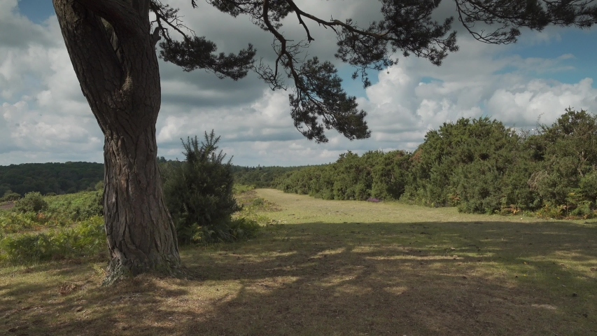 Heathland trail in the New Forest Hampshire, dolly out shot.