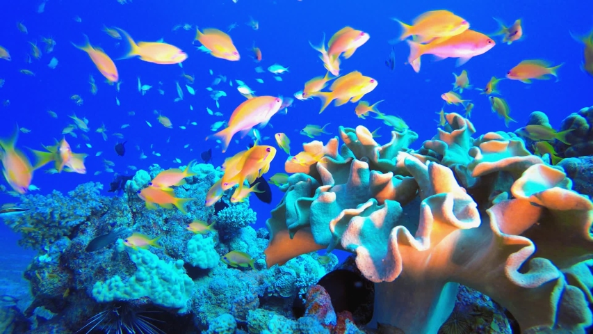 Underwater Tropical Corals Reef. Tropical underwater sea fish. Colourful tropical coral reef. Scene reef.  Marine life sea world. Underwater fish reef marine. Tropical colourful underwater seascape.