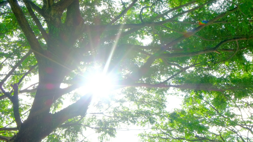 Beautiful Sun's rays and Sun flare through top of trees, sun shines through foliage. | Shutterstock HD Video #1057878322