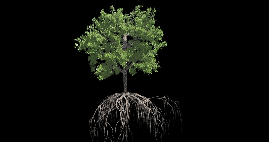 Tree growing animation. Tree growth sequence.   Shutterstock HD Video #1057880005