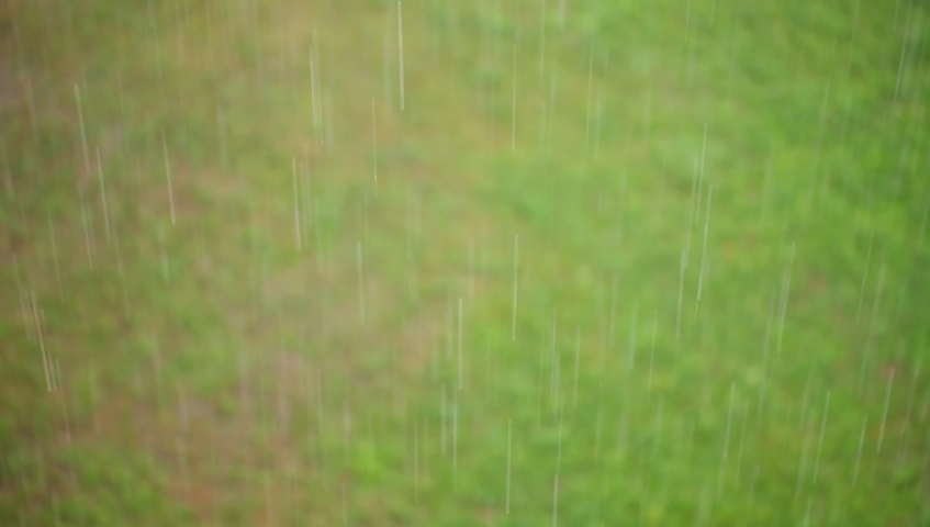 Drops of rain grass and tree in the park top view | Shutterstock HD Video #1057944832