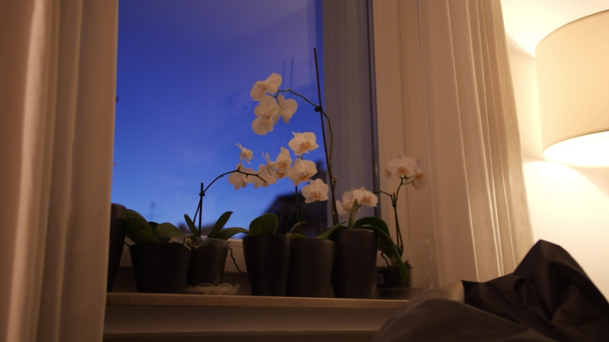 Beautiful Flower on a Window Ledge during a Clear Sunset in Autum with Perfect Indoor Light
