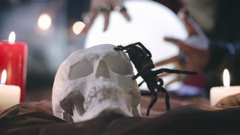 Close up of tarantula sitting on skull with burning candles and woman seer hands on illuminated magic ball on background. Dark witch predicting future with crystal ball