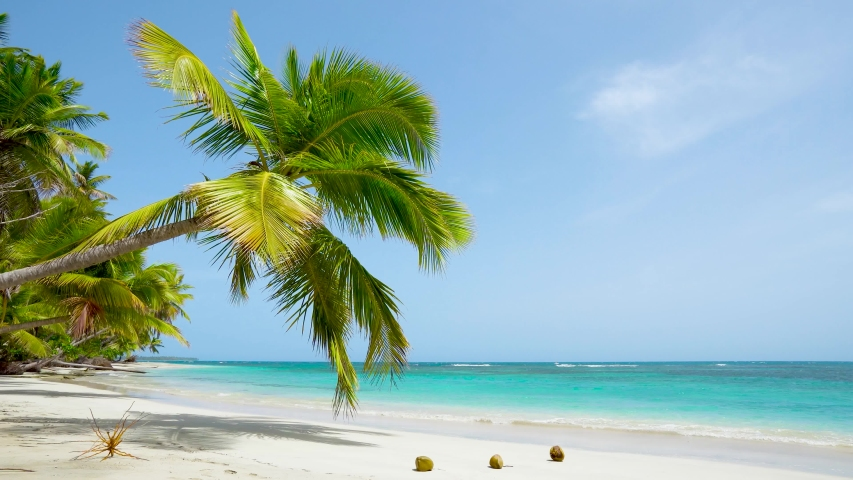 The best beaches in the world. Loop video sunny beach of Dominican republic Punta Cana. Amazing coconut palm tree on clear wild white sand beach. | Shutterstock HD Video #1058047420