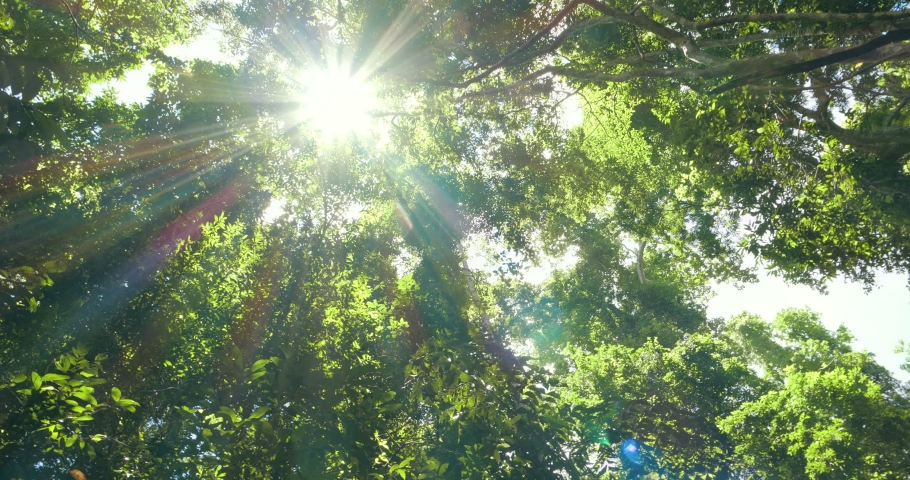 Looking at the sun through a green tree in forest. Sun shines through leaves.