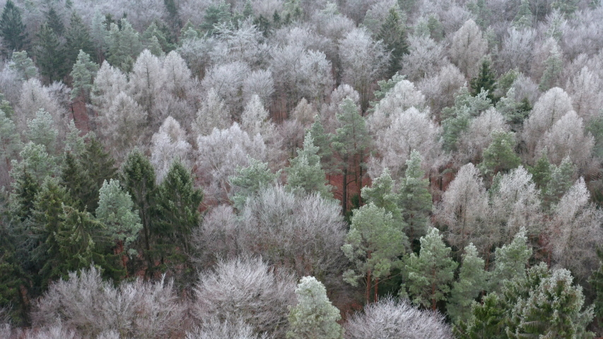 Aerial view of forest with hoar frost, Steigerwald, Bavaria, Germany | Shutterstock HD Video #1058057866