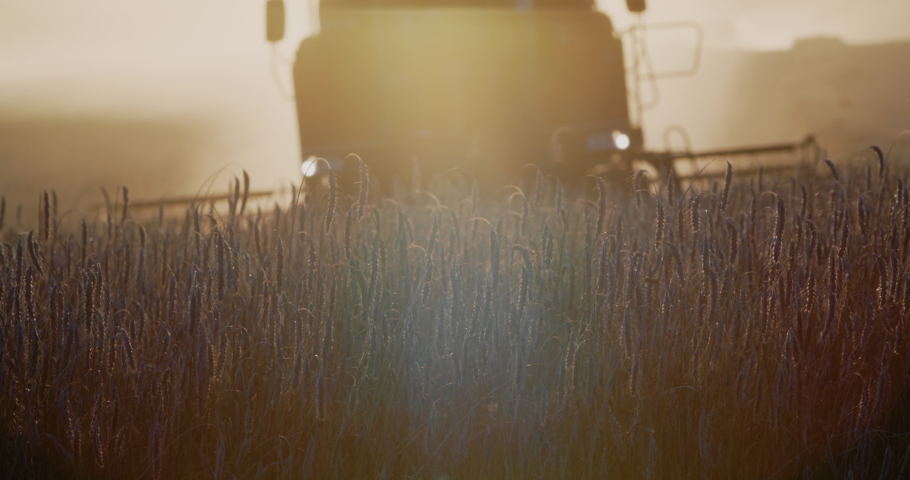 Close-up harvester machine cut wheat crop in rural field. Agriculture food production. Combine harvesting, collects ripe wheat grains. Wheat harvest. Sunset, sunrise golden hour. Royalty-Free Stock Footage #1058099059