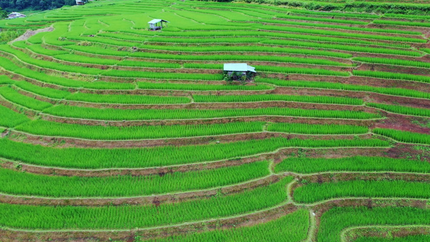 Asian rice field terrace on mountain side in Pabongpiang village, Chiang mai province,Thailand. | Shutterstock HD Video #1058102014