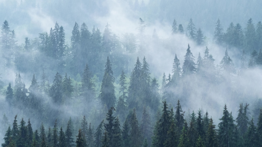 Timelapse of rainy weather in mountains. Misty fog blowing over pine tree forest | Shutterstock HD Video #1058143807