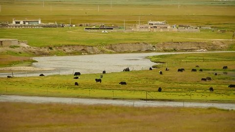 4k a flock of yak on the Prairie,River flowing through the tibet grassland.China plateau scenery. gh2_09144_4k