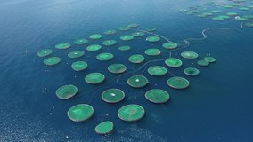 Aerial drone video of large fish farming unit of sea bass and sea bream in growing cages in calm deep waters