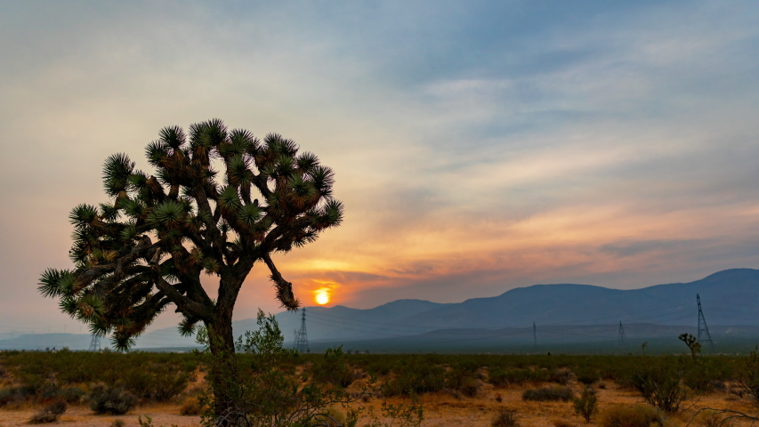 The evening sun sets behind the mountain range with a Joshua tree and the Mojave Desert landscape in the foreground - static time lapse with smoke and haze from the Lake FIre