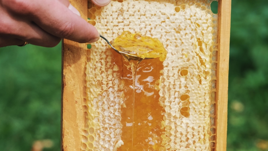 Thick Honey Dripping Down Honeycomb. Man hand gather fresh honey with a spoon. Gold Honey dripping from honeycomb. Healthy food concept. eco natural food. bee honey. Royalty-Free Stock Footage #1058208751