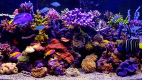 Tropical colorful coral reef aquarium fish underwater scene 4K aerial view