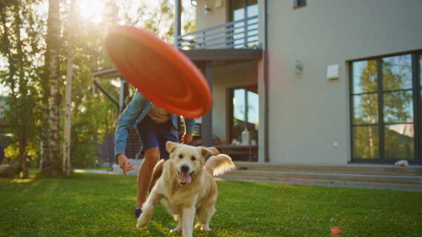Handsome Man Plays Catch with Happy Golden Retriever Dog on the Backyard Lawn. Man Has Fun with Loyal Pedigree Dog Outdoors in Summer House Backyard. Handheld Slow Motion Shot