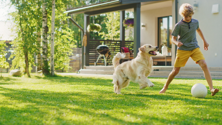Handsome Young Boy Plays Soccer with Happy Golden Retriever Dog at the Backyard Lawn. He Pets, Plays Football and Has Lots of Fun with His Loyal Doggy Friend. Idyllic Summer House. Slow Motion Royalty-Free Stock Footage #1058262127