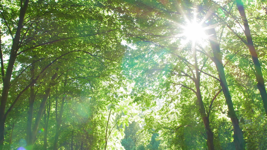 Sun is shining through the green foliage. Filmed with a wide angle lens in UHD. | Shutterstock HD Video #1058354902