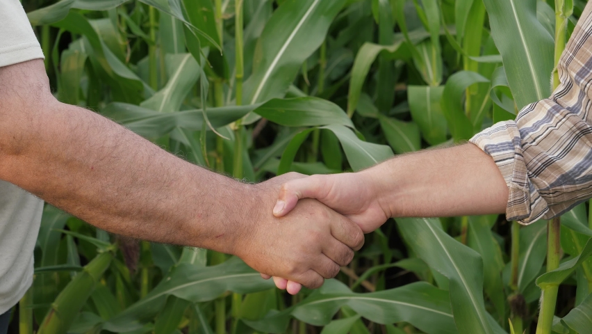 Two caucasian businessman farmer shake hands with each other. Agree successful deal or say hello. Closeup slow motion unrecognizable person. Background of agricultural field with growing ripening corn