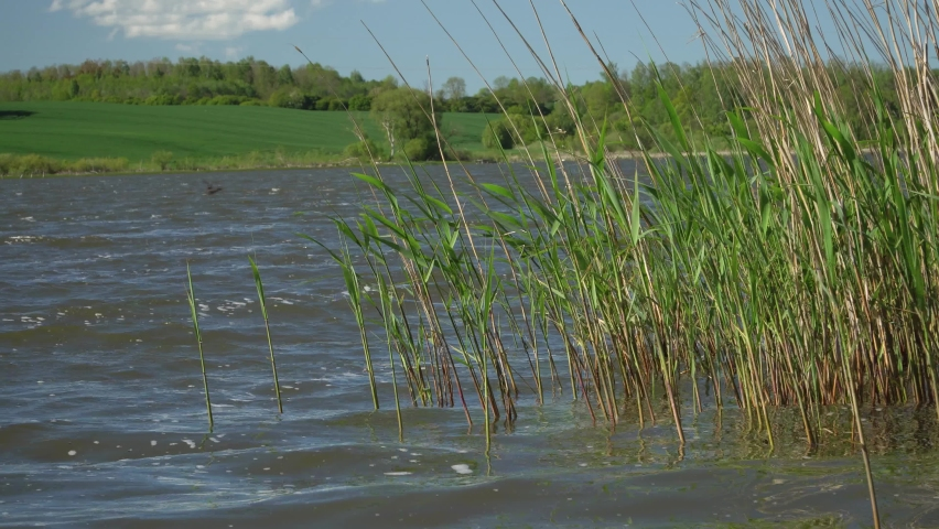 Beautiful landscape of the grassy lake-shore with reeds. Water reservoir surface waving on a windy day of a summer season. Rural environment scenic view near the pond. | Shutterstock HD Video #1058415796