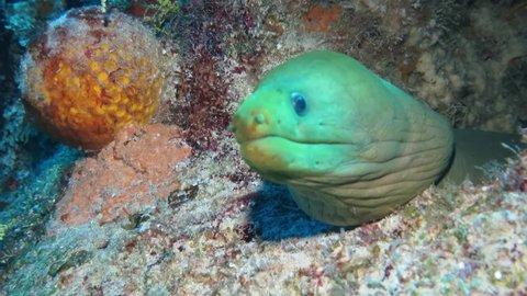 Under water marine life at Cozumel