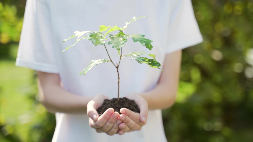 Close up hands holding sapling of young oak tree. Female palms embrace the soil stem a small tree. blurred green background, white shirt. concept nature conservation, Earth protection, reforestation | Shutterstock HD Video #1058553361