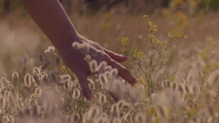 Woman Hands Touching Flowers.Hand Touches Grass In Wheat Field.Beautiful Woman In Love On Meadow.Sun Through Hands.Girl Relax On Morning.Girl Enjoying Grass At Sunrise.Woman Walking On  Nature Field.