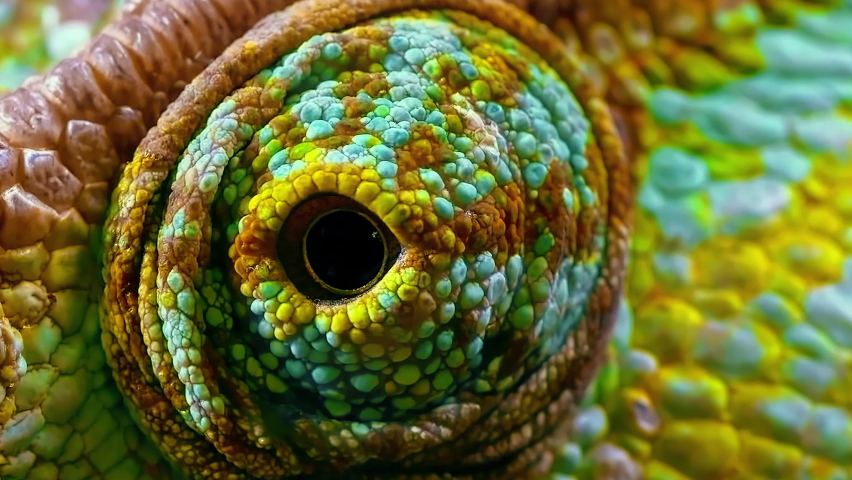 An extreme close-up of a Chameleon's eye moving around. Royalty-Free Stock Footage #1058567968