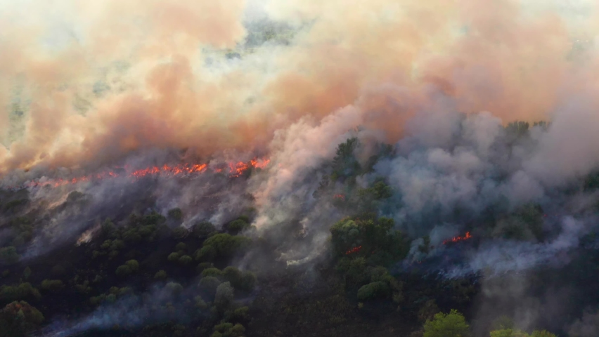 Wildfire aerial view. Fire and smoke. Burning forest. Natural disaster from climate change. Dry grass and trees burns Royalty-Free Stock Footage #1058578438