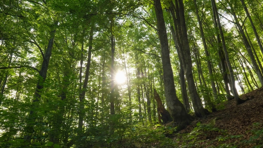 Beautifull sunrise in the forest. Gimbal shot of warm sunbeams illuminating tree trunks and shrubs. Mountain forest with the trees growing on hills. High quality 4K shot   Shutterstock HD Video #1058600644