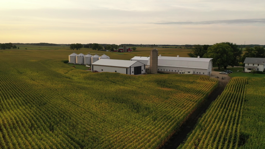 Aerial view of american Midwestern farm, agricultural field at harvesting season (September). Drone flying low over the corn field. Rural landscape, countryside, early sunny morning