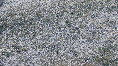 Meteorology, types of precipitation. Tapioca snow (graupel; powder snow). Large round dense snowflakes intermediate in density between snow and hail. Spring snowfall