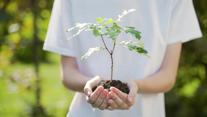 Close up hands holding sapling of young oak tree. Female palms embrace the soil stem a small tree. blurred green background, white shirt. concept nature conservation, Earth protection, reforestation   Shutterstock HD Video #1058650819