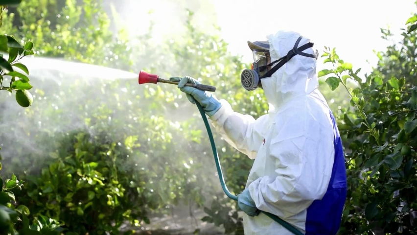 Farmer in protective clothes spray pesticides. Farm worker spray pesticide insecticide on fruit lemon trees. Ecological insecticides Royalty-Free Stock Footage #1058667079