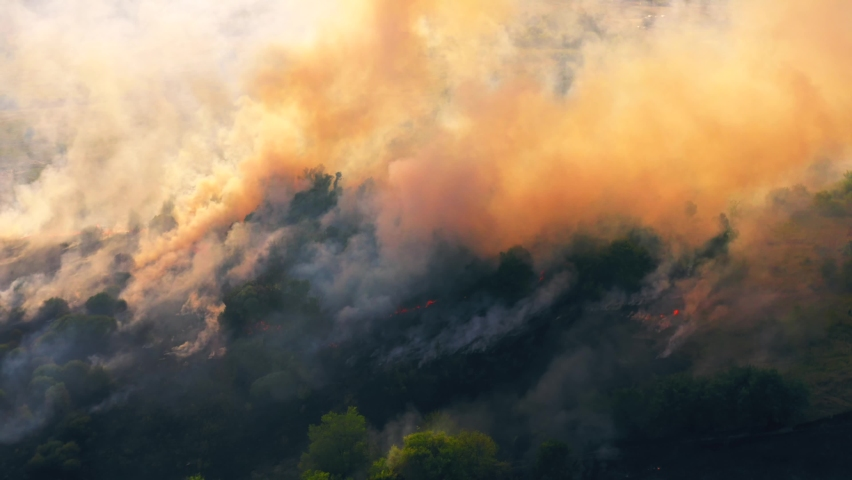 Summer wildfire or fire in nature with smoke, aerial view from drone. Burning dry grass and trees. Natural disaster in forest in dry season | Shutterstock HD Video #1058772949