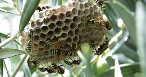 honey bees at honey comb