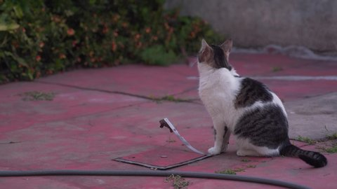 cat waiting quietly outside the house