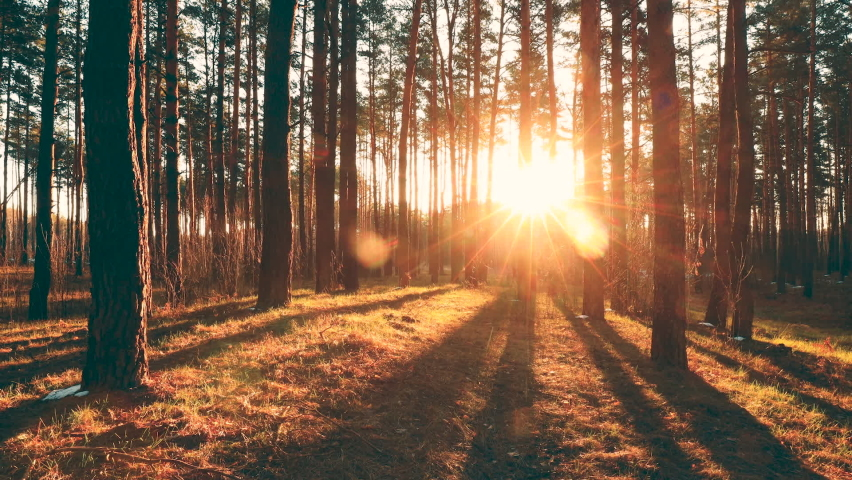 Beautiful Sunrise Sun Sunshine In Sunny Spring Coniferous Forest. Sunlight Sunbeams Through Woods In Forest Landscape. | Shutterstock HD Video #1058887222