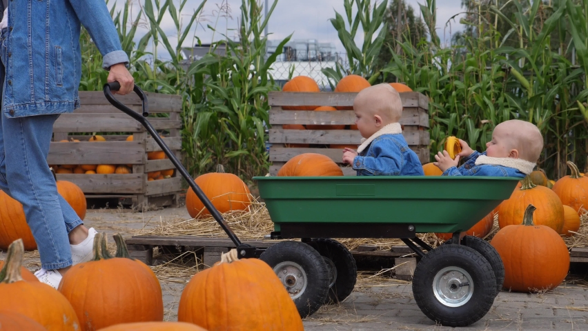 Fun and educational day at pumpkin patch. Mom carrying her baby twins in a cart through field with pumpkins  | Shutterstock HD Video #1058931962
