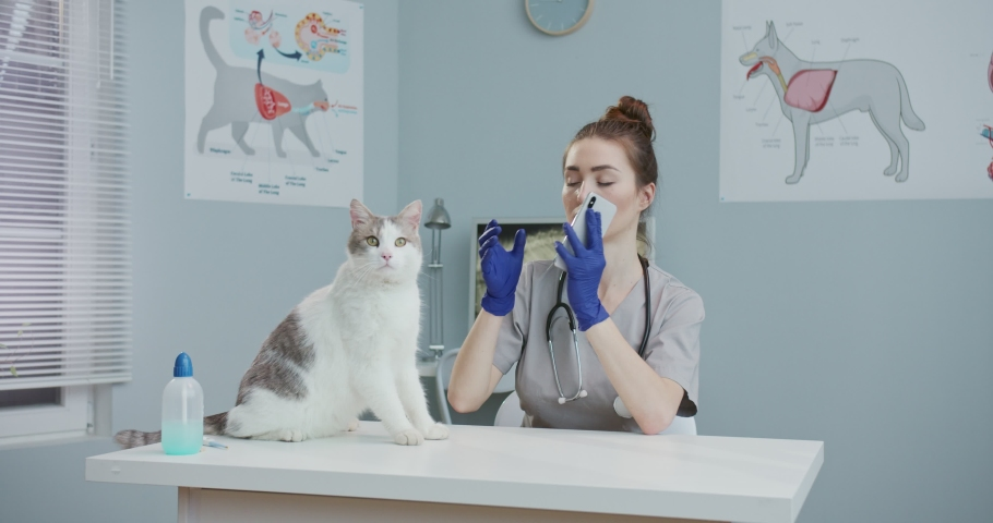 Veterinarian sitting in hospital stroking cat while speaking on phone. woman in medical suit with stethoscope, blue gloves having conversation oh smartphone. Concept of pets care, veterinary.