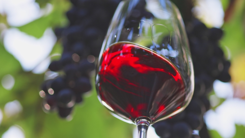 Glass of gorgeous aged red wine against background of black grapes. Wine tasting and winemaking concept. Woman hand holding and lightly shaking glass of red wine. Waving red wine in glass   Shutterstock HD Video #1059019781