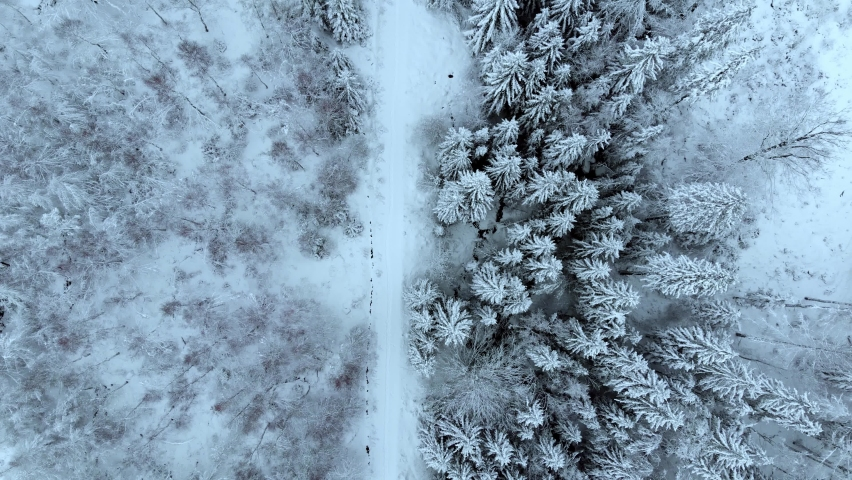 Aerial view overlooking a road, in middle of snow covered trees and snowy forest, on a dark, cloudy, winter day - Top down, drone shot